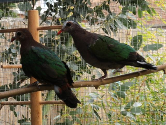 Mes oiseaux Pa040014