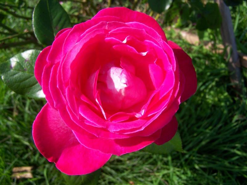 Les photos d'un jardin... 100_3714