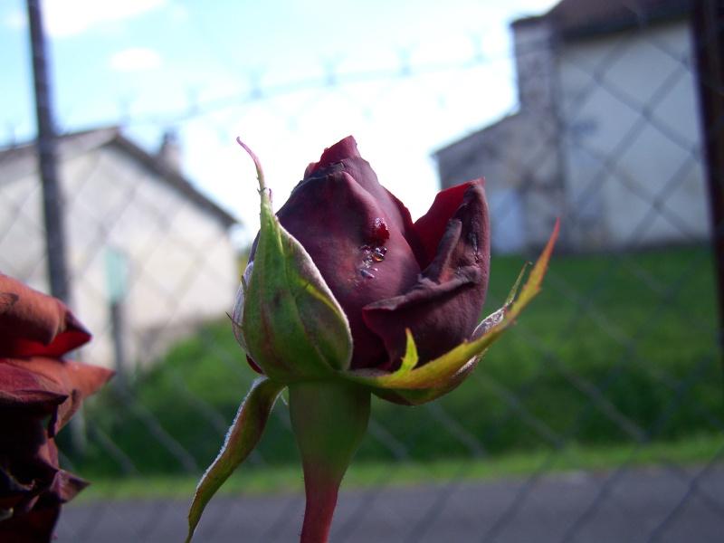 Les photos d'un jardin... 100_3715