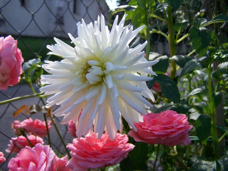 Les photos d'un jardin... 100_3716