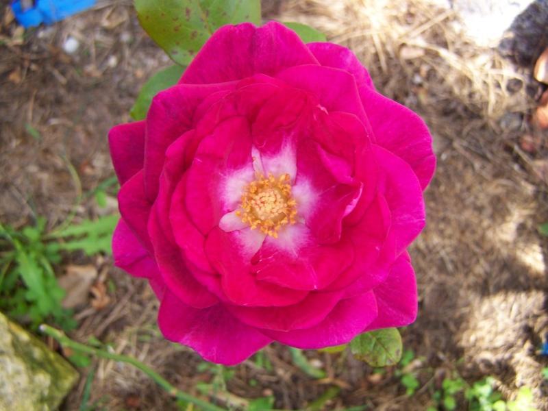 Les photos d'un jardin... 100_3810
