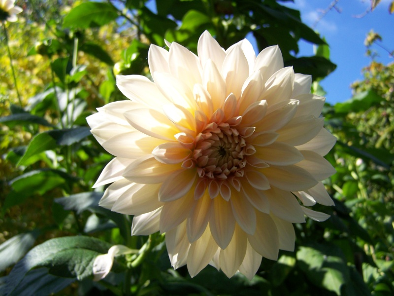 Les photos d'un jardin... 100_3811
