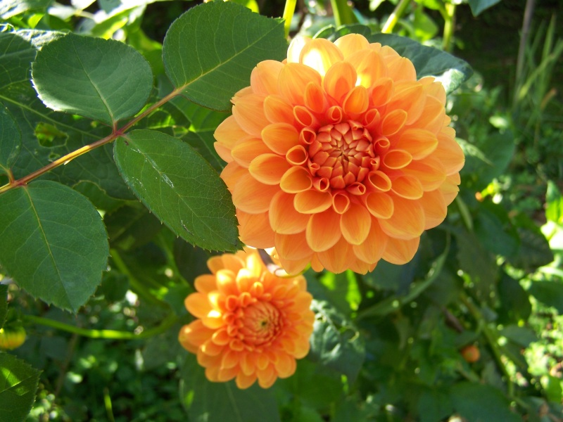 Les photos d'un jardin... 100_3812