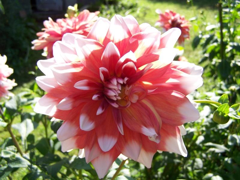 Les photos d'un jardin... 100_3813
