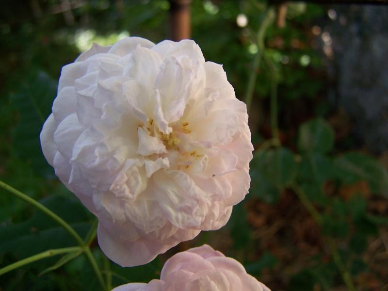 Les photos d'un jardin... 100_3814