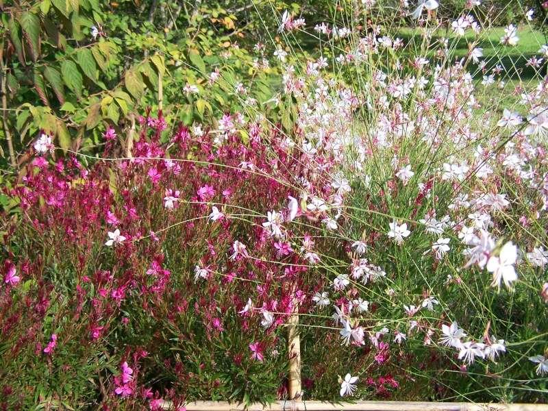Les photos d'un jardin... 100_3816