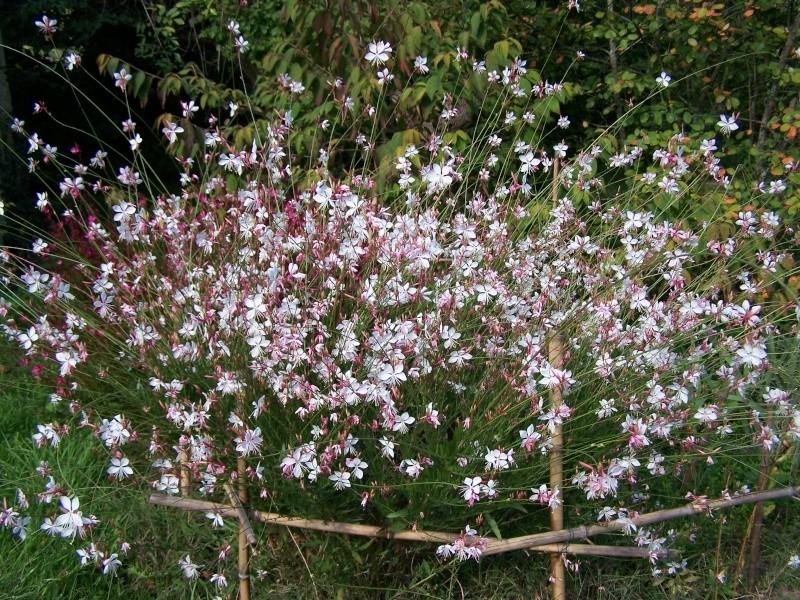 Les photos d'un jardin... 100_3818