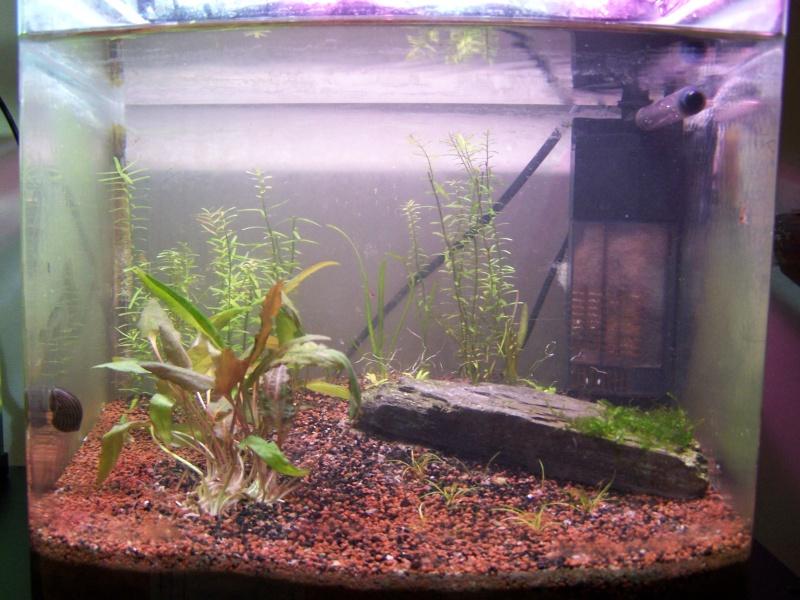 Deux petits aquariums... 100_3822