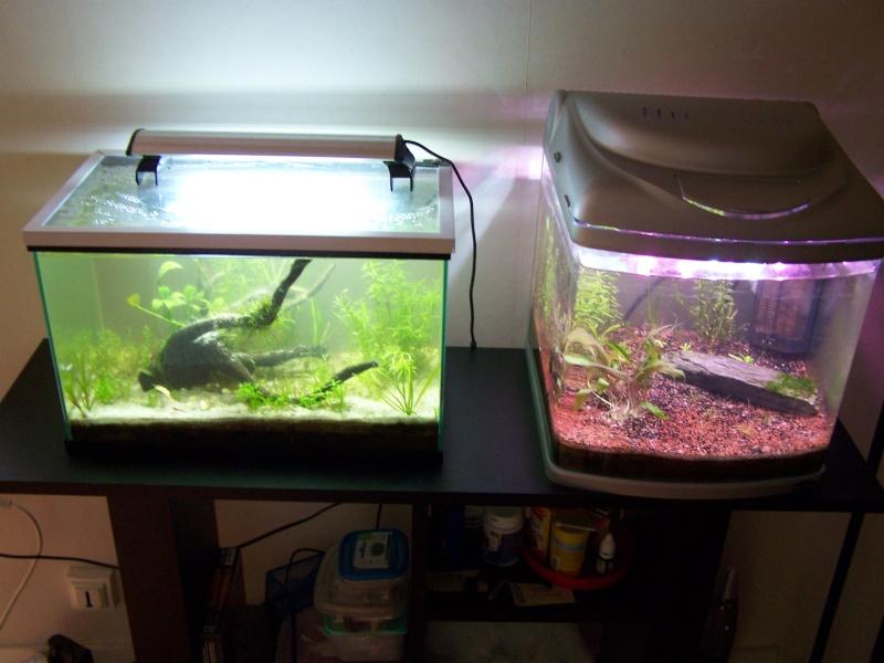 Deux petits aquariums... 100_3823