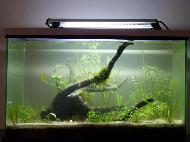 Deux petits aquariums... 100_3824