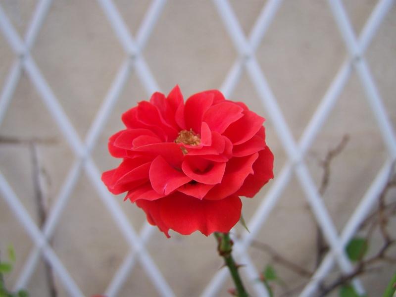 Les photos d'un jardin... 100_3829