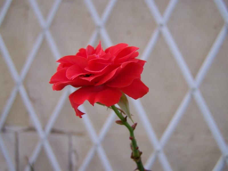 Les photos d'un jardin... 100_3830