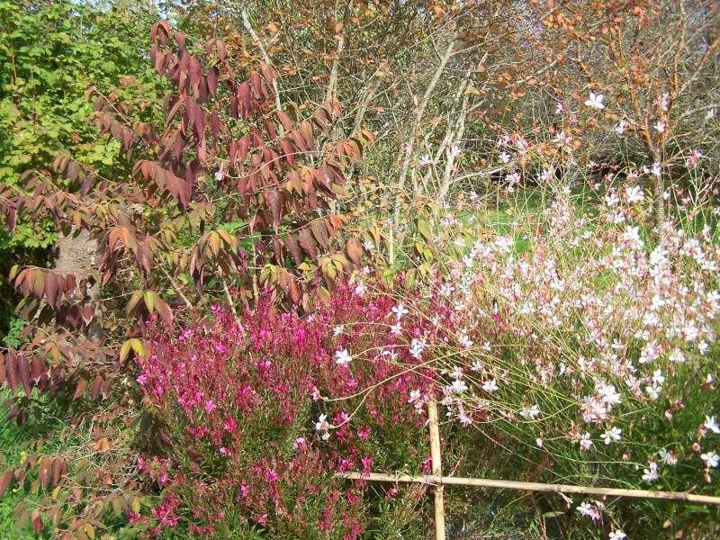 Les photos d'un jardin... 100_3832