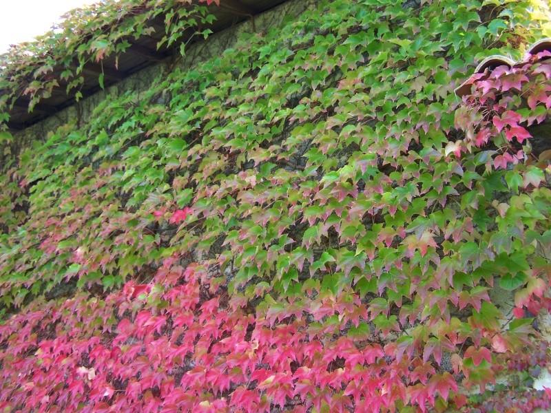 Les photos d'un jardin... 100_3833