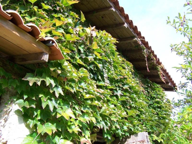 Les photos d'un jardin... 100_3910