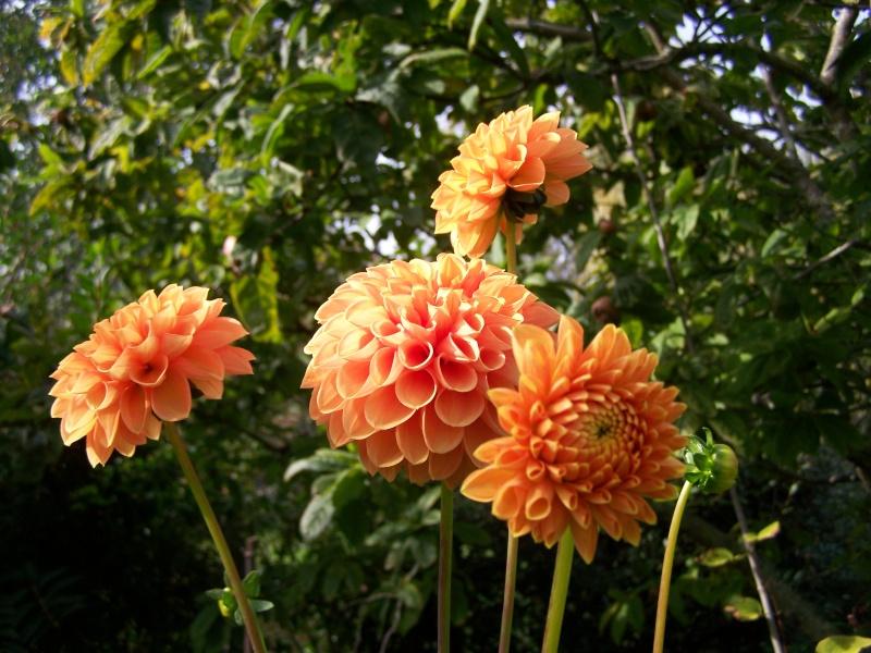 Les photos d'un jardin... 100_3911