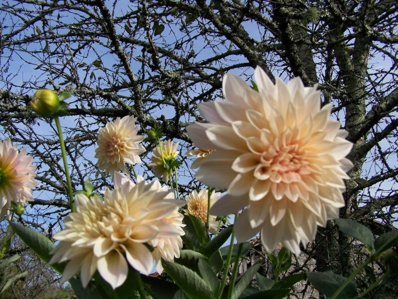 Les photos d'un jardin... 100_3912