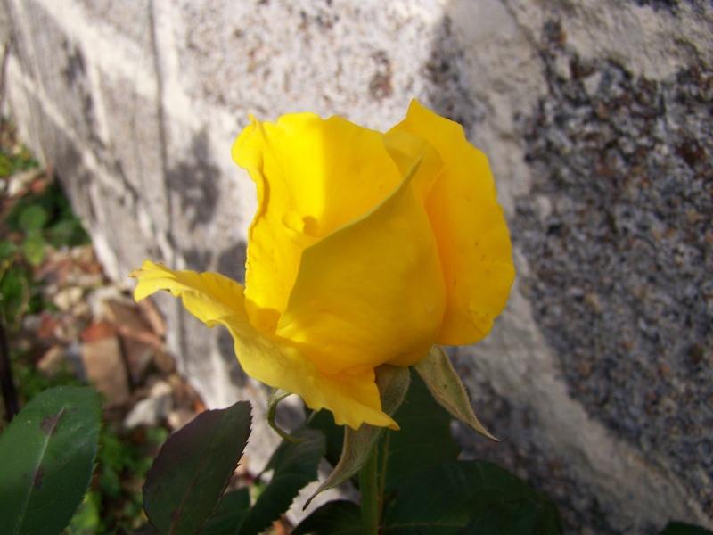 Les photos d'un jardin... 100_3913