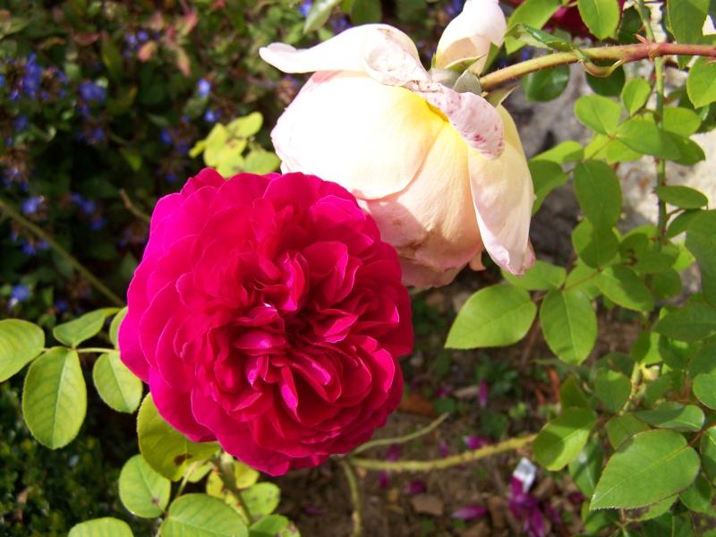 Les photos d'un jardin... 100_3914