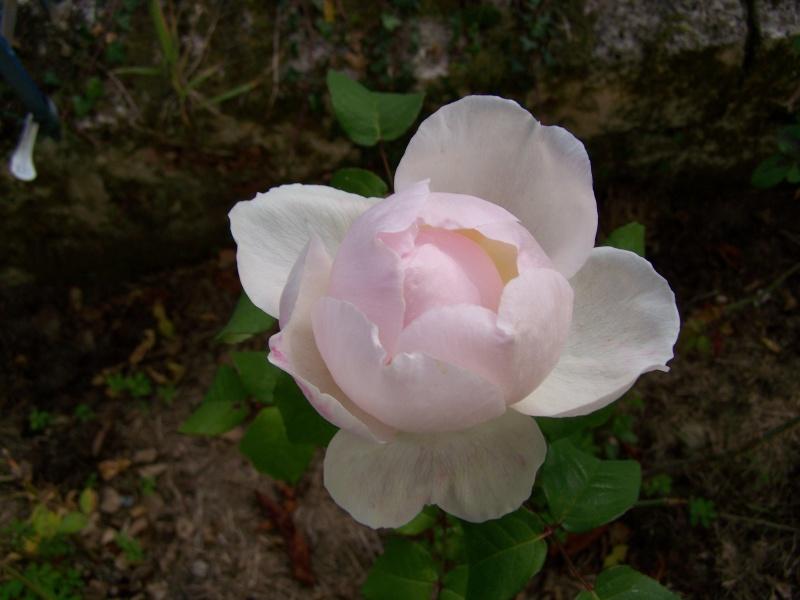 Les photos d'un jardin... 100_3915