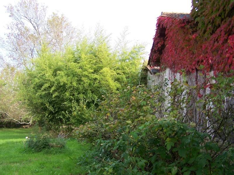 Les photos d'un jardin... 100_3916