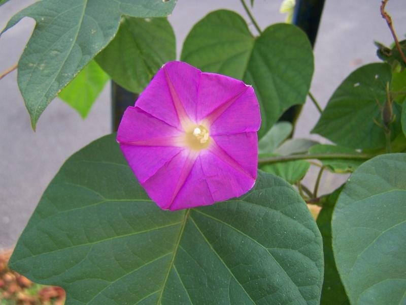 Les photos d'un jardin... 100_3918