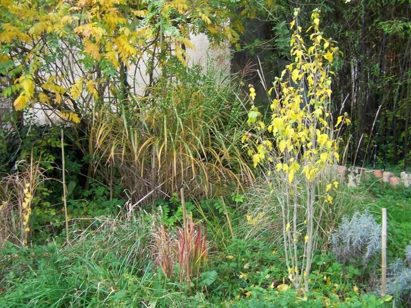 Les photos d'un jardin... 100_3920