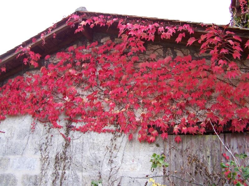 Les photos d'un jardin... 100_3921