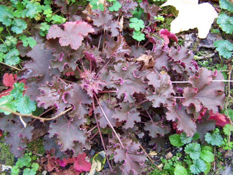 Les photos d'un jardin... 100_3922