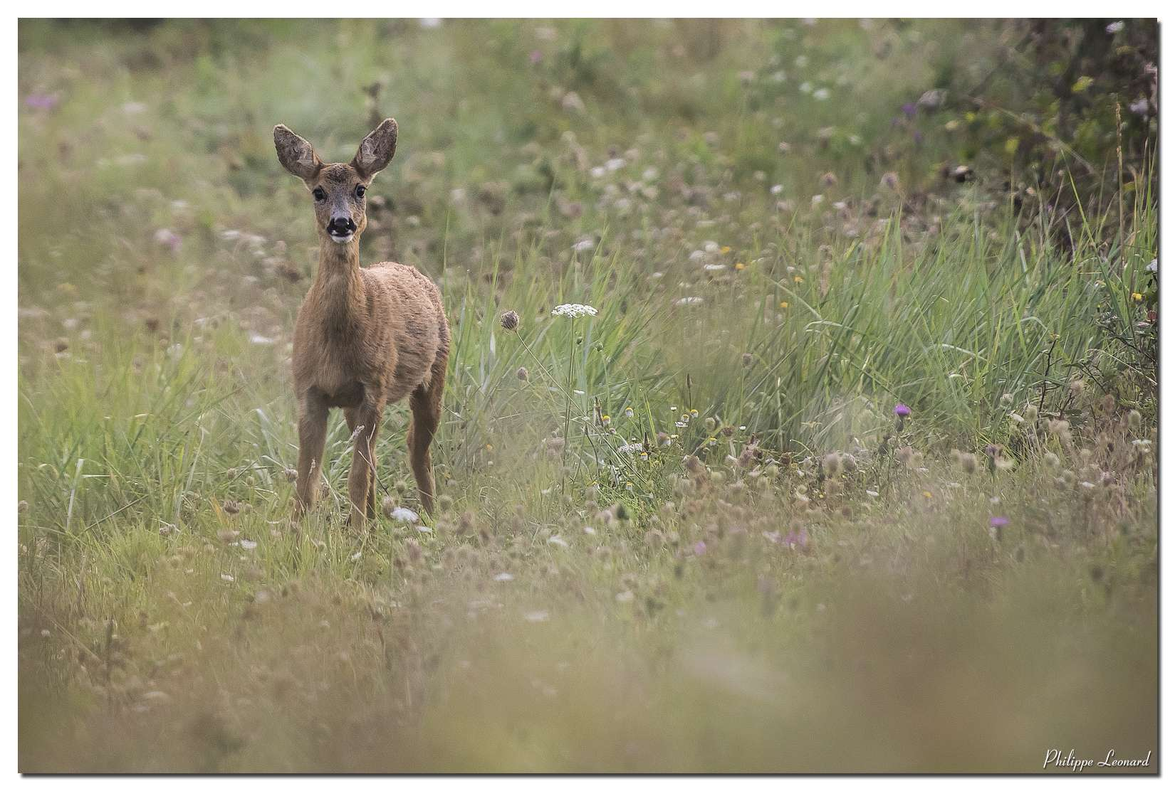 Bambi 08092012