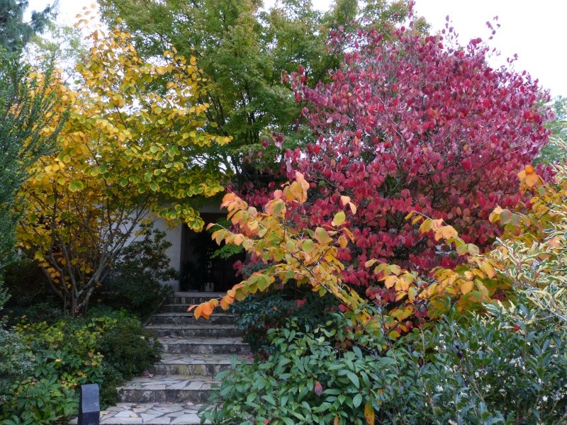 Ambiance automne 2015 Couleu10