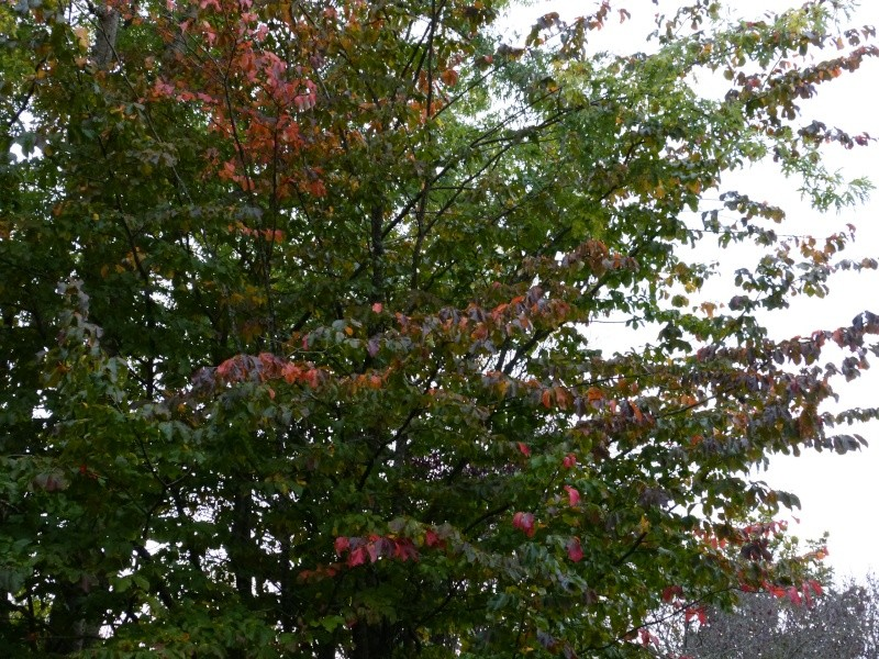 Ambiance automne 2015 Parrot10