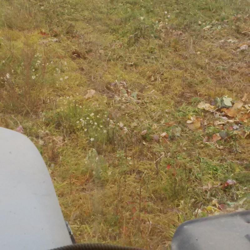 Debut des semis de blé Img_2012