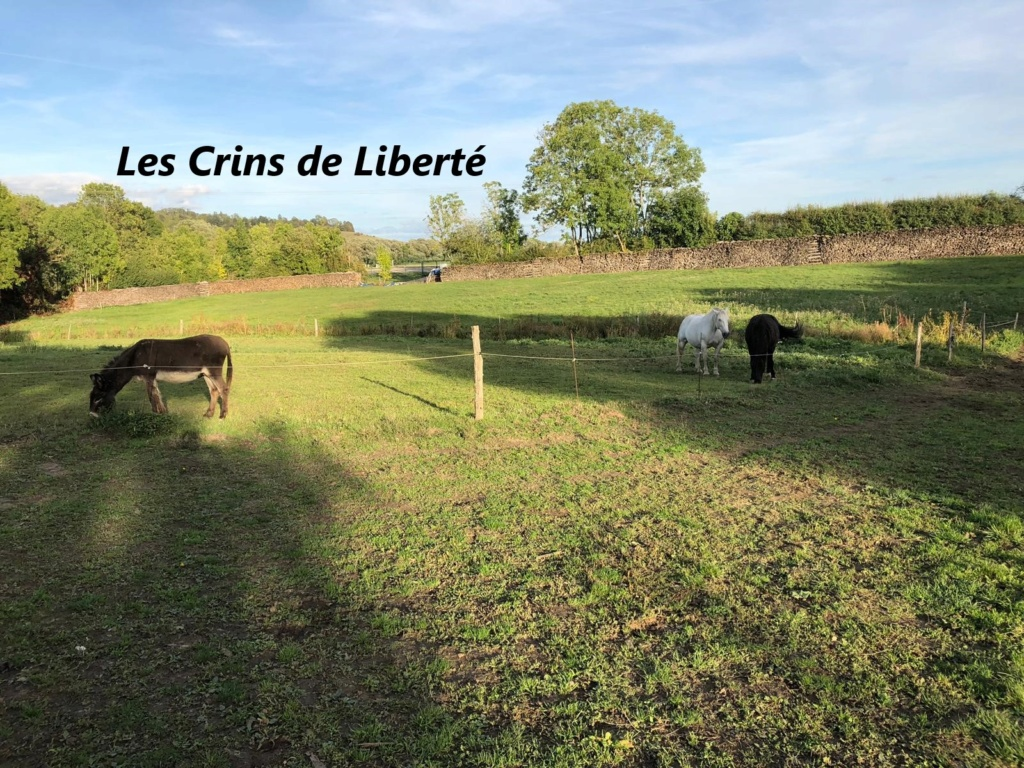 DPT 54 - 13 ans- TAQUIN- ONC selle- Contact Anne-sophie Crt212