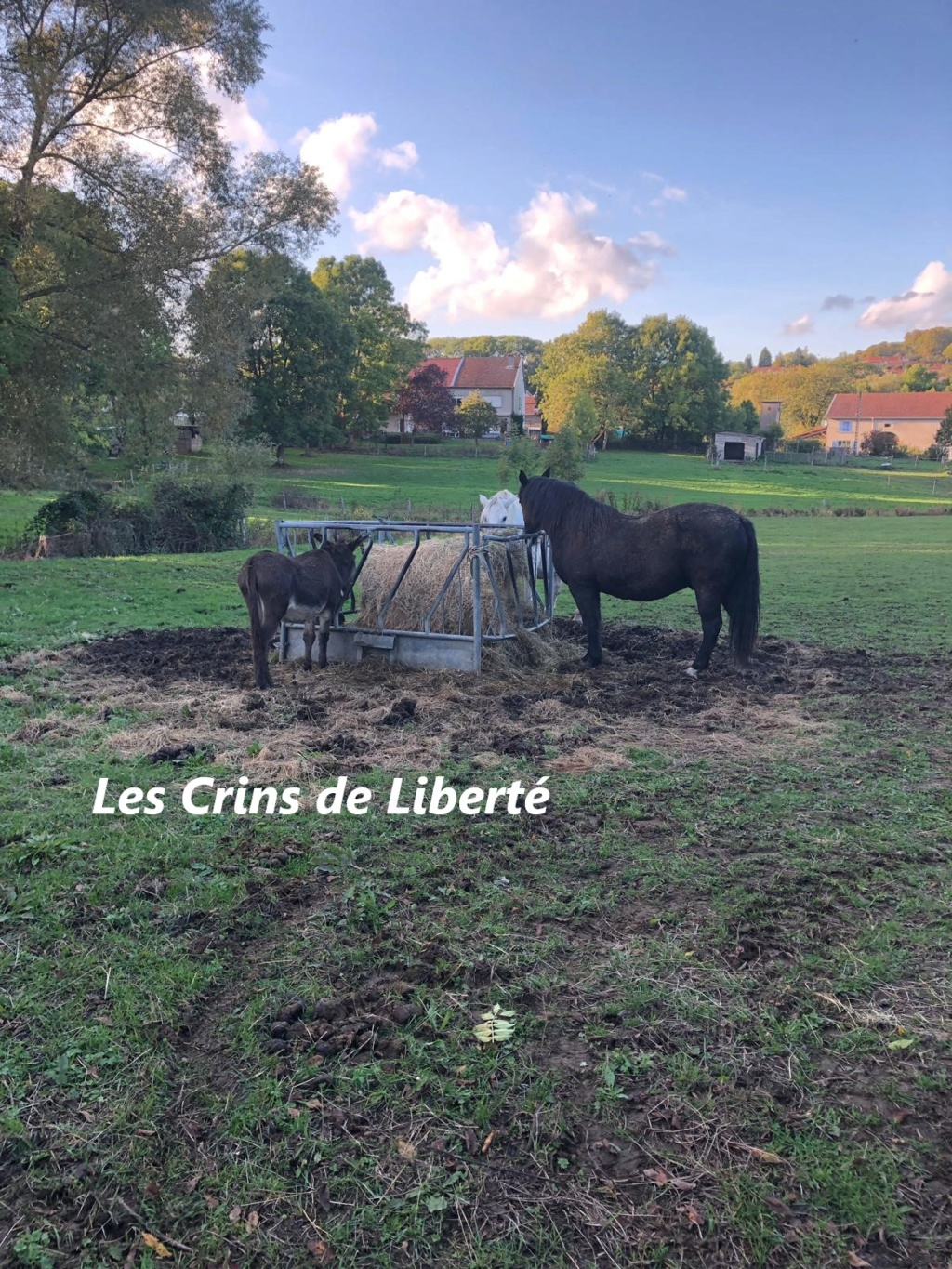 DPT 54 - ROMEO - Ane ONC- Contact Anne-sophie Crt310