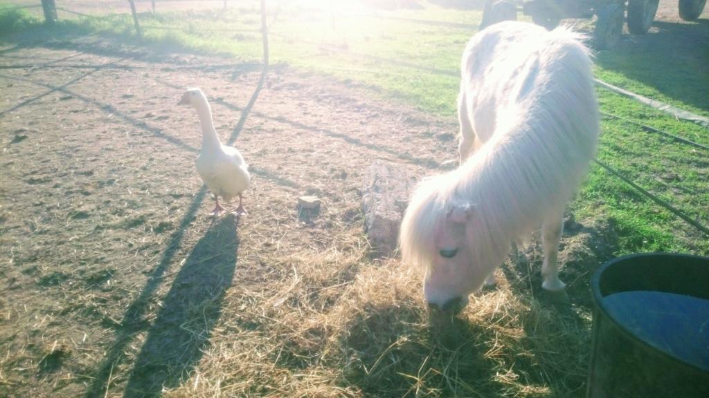 Dpt 51 - 22 ans - CHIPIE - ONC poney adoptée par Murielle Dsc_0110