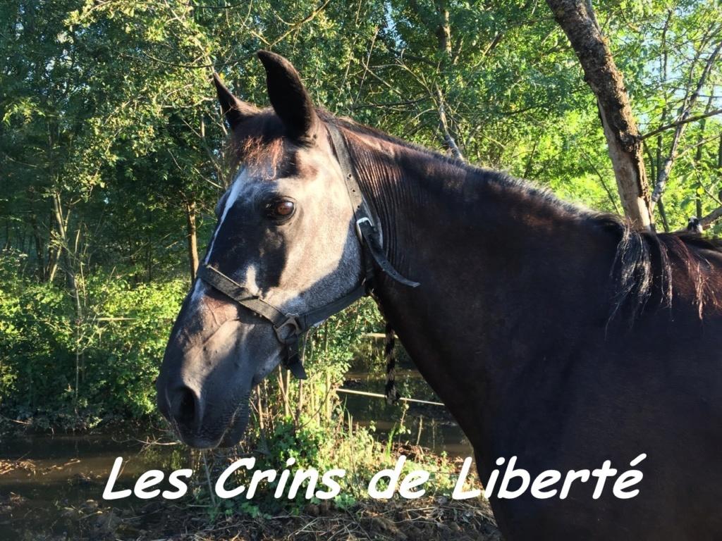 Dpt 13 - 29 ans - EUREKA - ONC poney- Contact Anne-sophie Eure1b10
