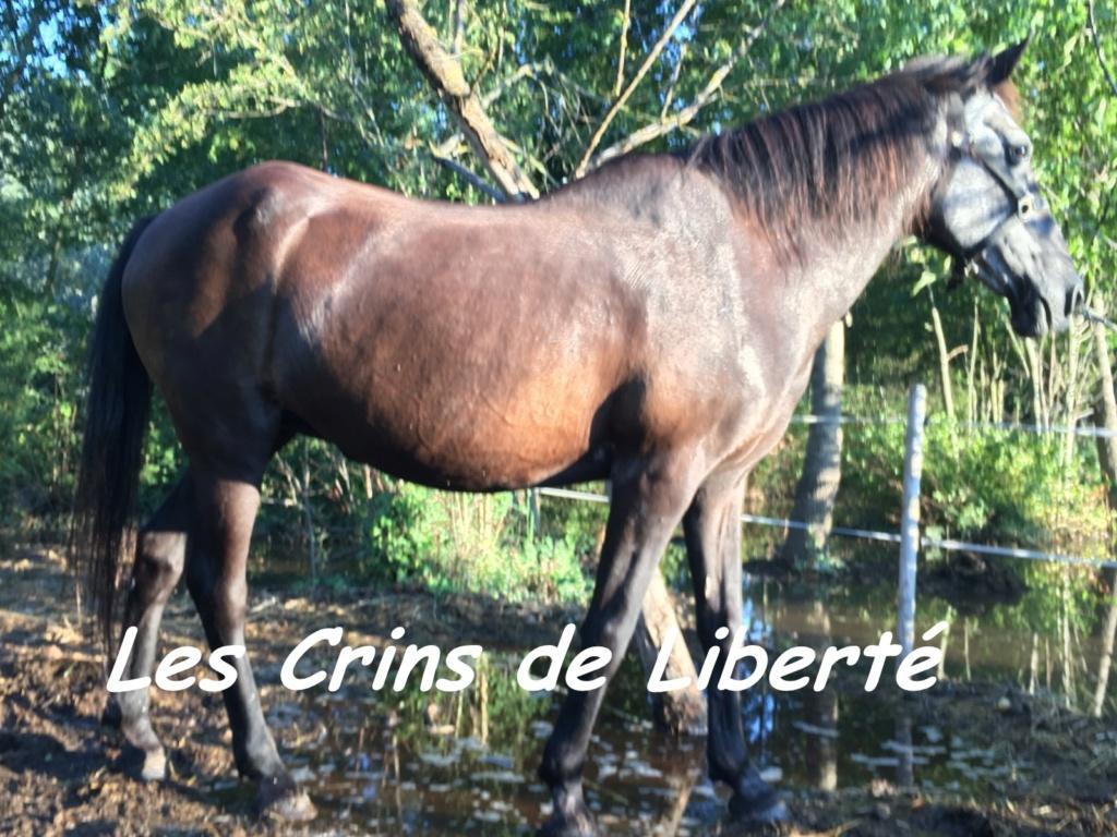 Dpt 13 - 29 ans - EUREKA - ONC poney- Contact Anne-sophie Eure2b10