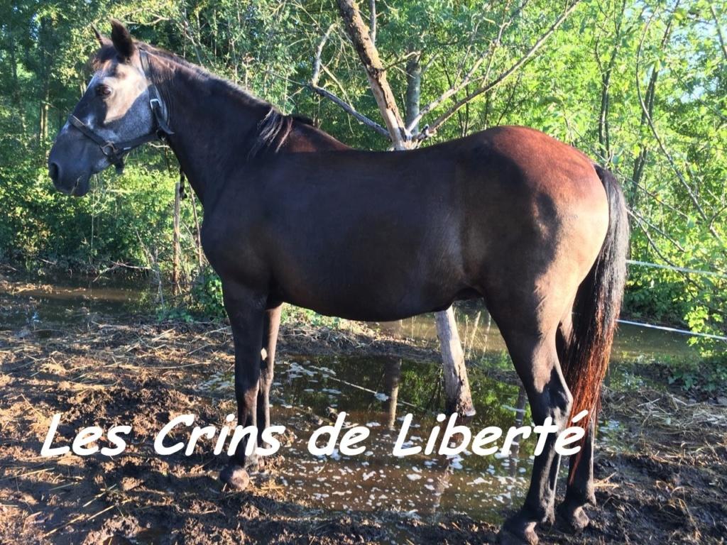 Dpt 13 - 29 ans - EUREKA - ONC poney- Contact Anne-sophie Eure3b10