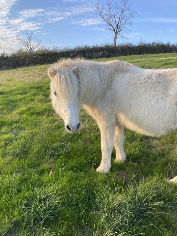 Dpt 51 - 22 ans - CHIPIE - ONC poney adoptée par Murielle Img_0410
