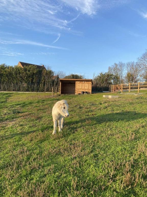 Dpt 51 - 22 ans - CHIPIE - ONC poney adoptée par Murielle Img_0411