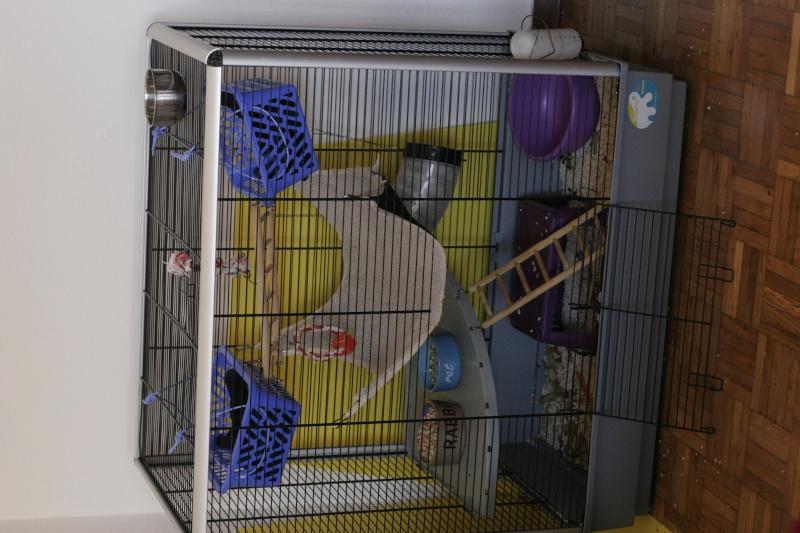 JENNY KD + Grande cage Plexi _mg_1310