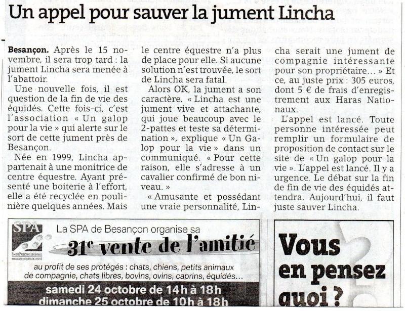 LINCHA - ONC selle typée PRE née en 1999 - adoptée en décembre 2015  Articl10