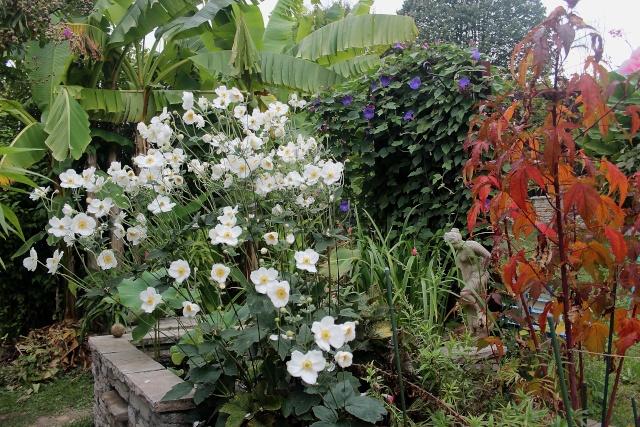 l'automne et ses couleurs Anemon10