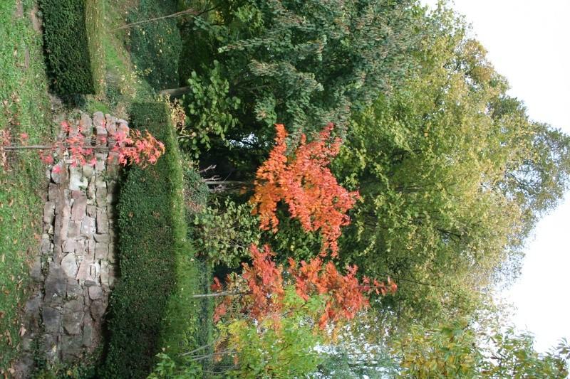 le jardin  - Page 4 Img_6512