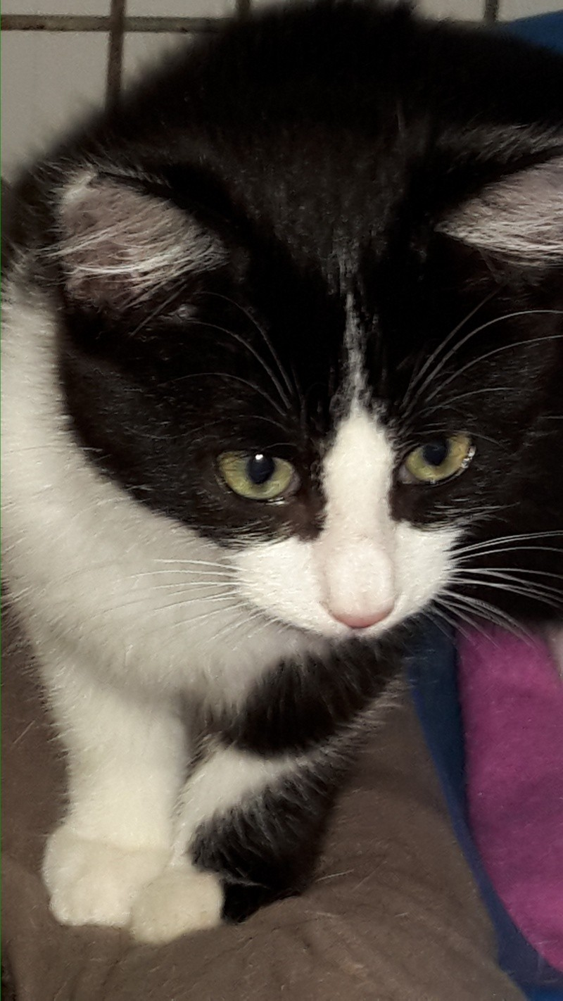 Adoption de LILA - 12 octobre 2015. 20151024