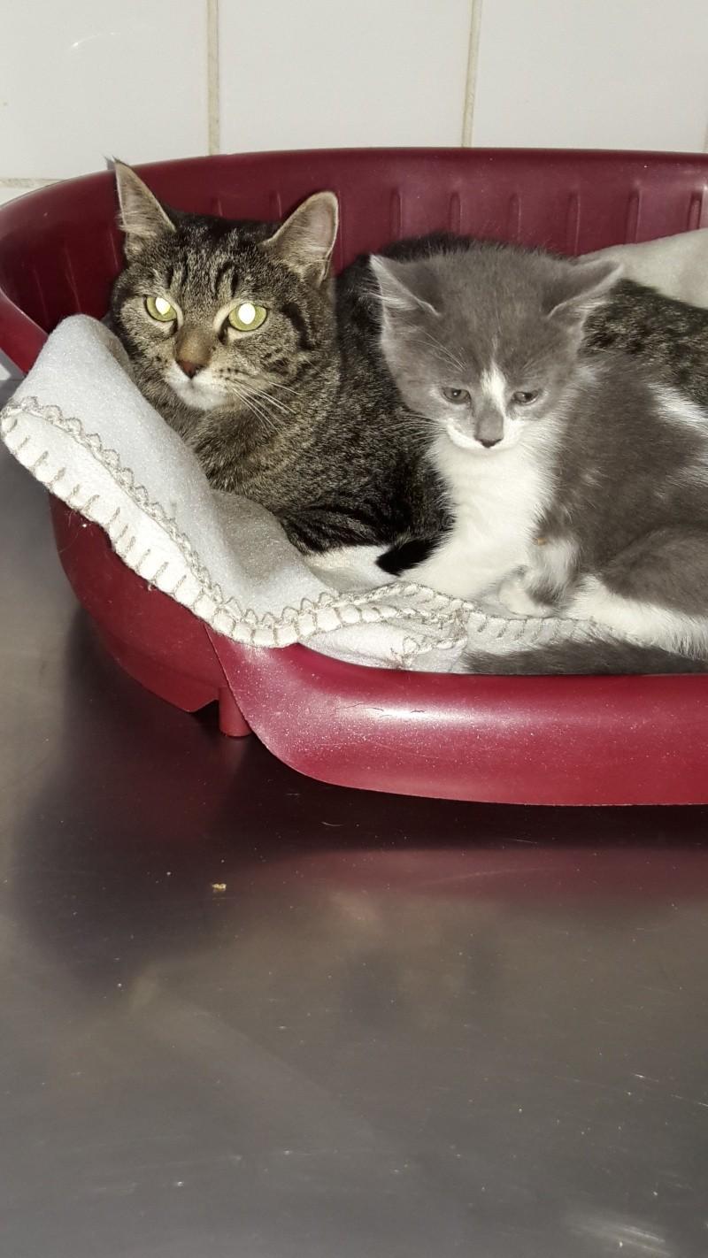 maman et bébé chat 20151050