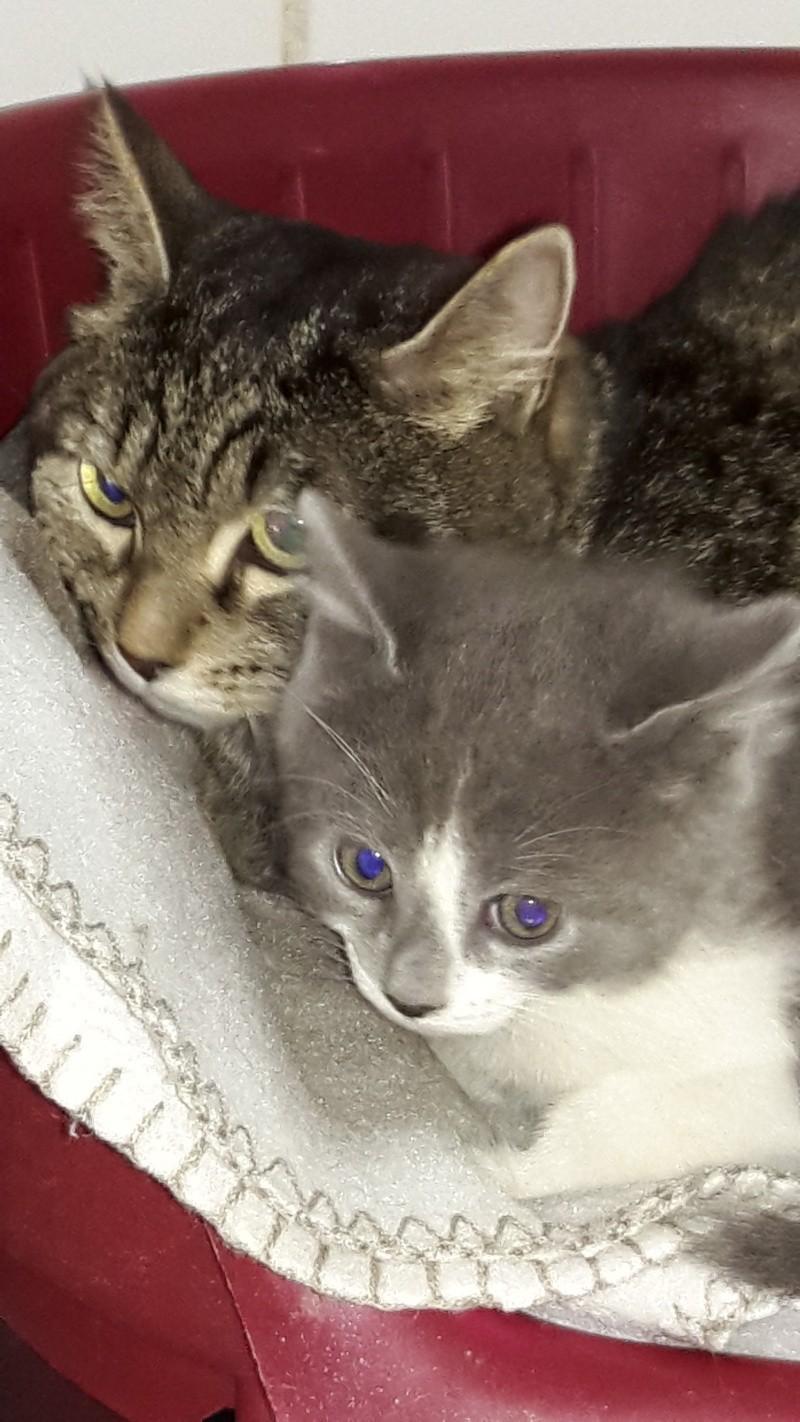 maman et bébé chat 20151053