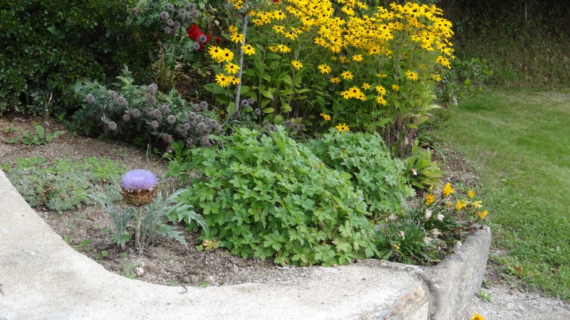 jardin fleuri   Dsc04913