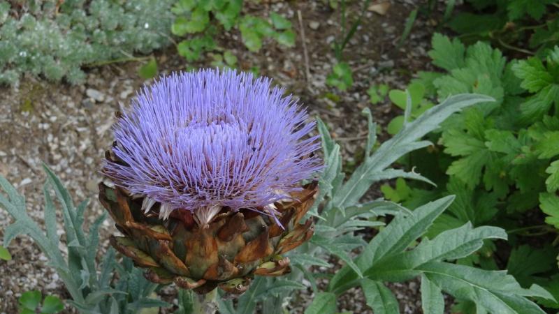 jardin fleuri   Dsc04914